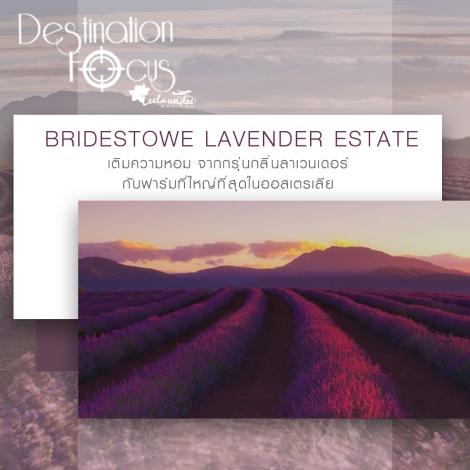 banner-line-bridestowe1