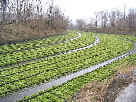 Daio Wasabi Farm 2